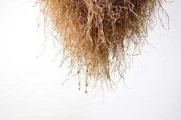 Louise Weaver - Hiding in plain sight (Witch grass nest) (detail)